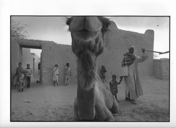 Kamelblikk, Tsjad 2012 (15) 40x50cm Gelatine Silver Print