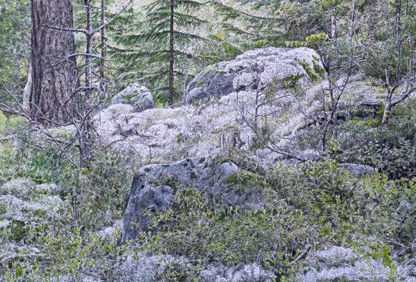 Ivar Samuelsen, Skogsfragment 79